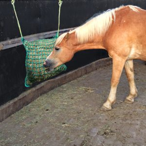 slowfeeder paard