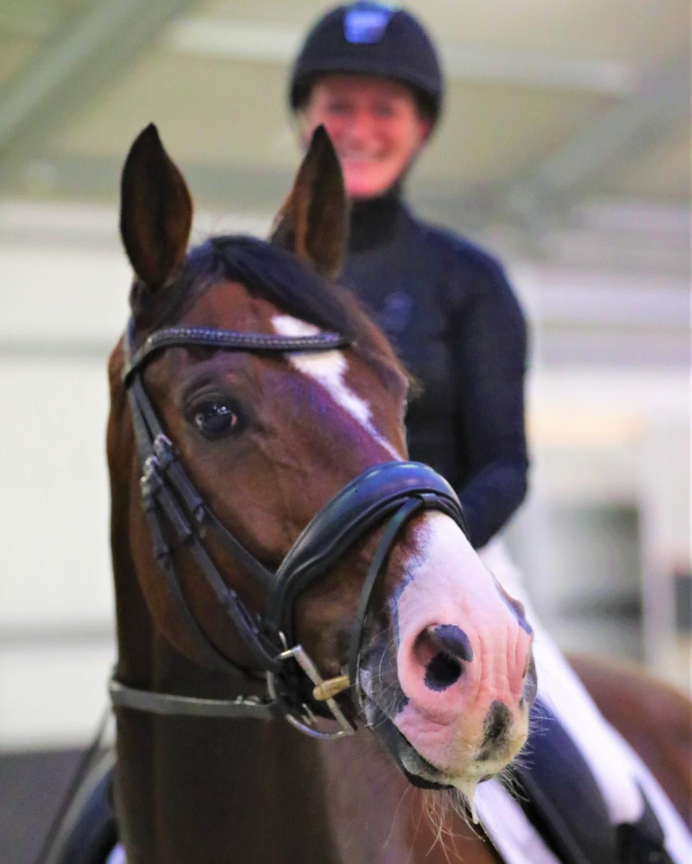 Vrouw op paard met bridle2fit hoofdstel