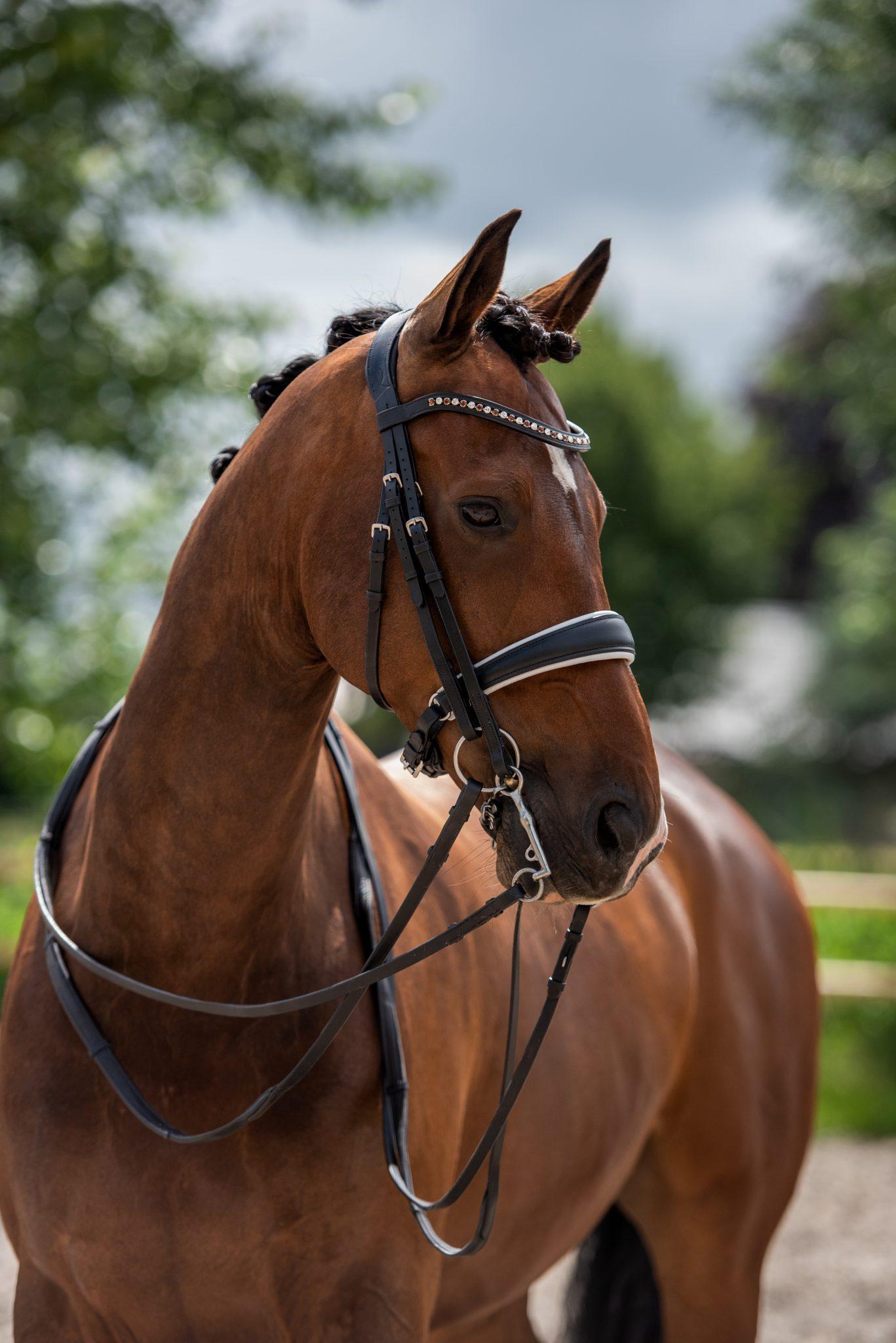 Compleet Bridle2fit hoofdstel en leidsel op een paard
