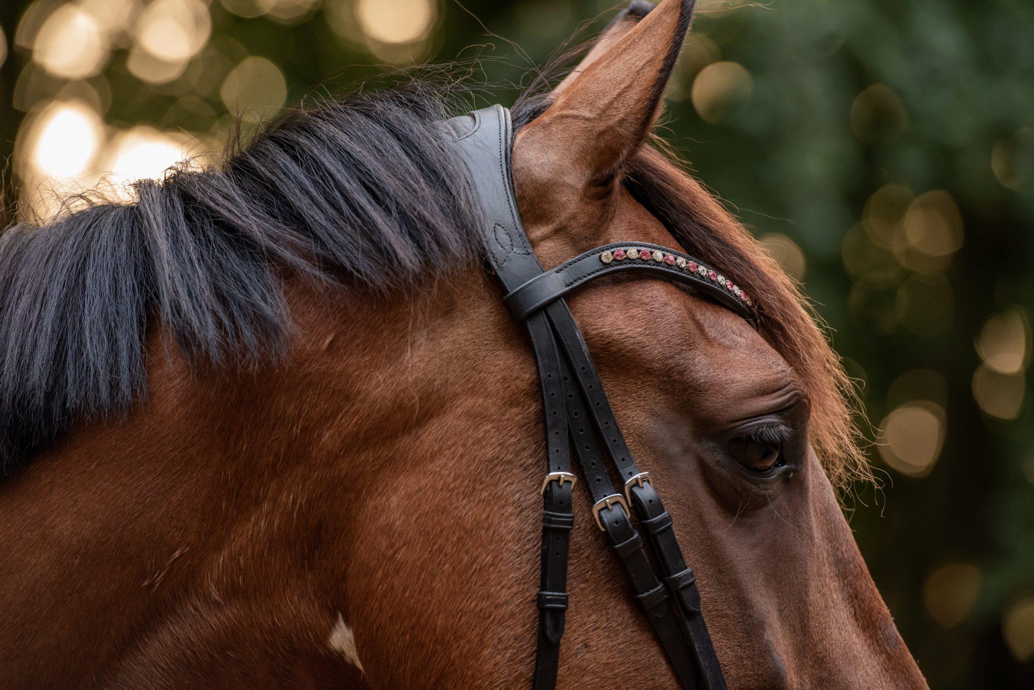 Bridle2fit hoofdstel op het hoofd van een paard