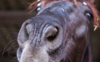 Blog Paard & Voeding Weerstand